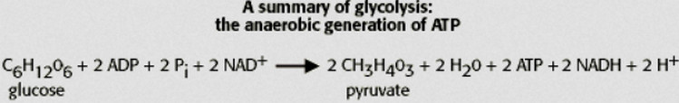 equation of aerobic glycolysis